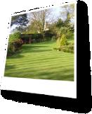 Recently Cut Lawn