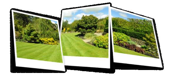 Lawn Photos