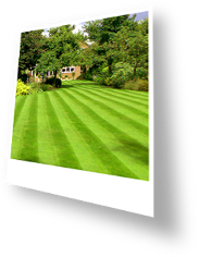 Lawn with Stripes