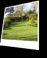 Garden with Cut Grass